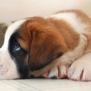 Beautiful puppy pictures.JPG