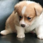 Adorable puppy photo of.JPG