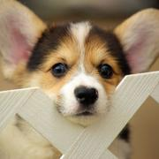 Cute puppy picture of.JPG
