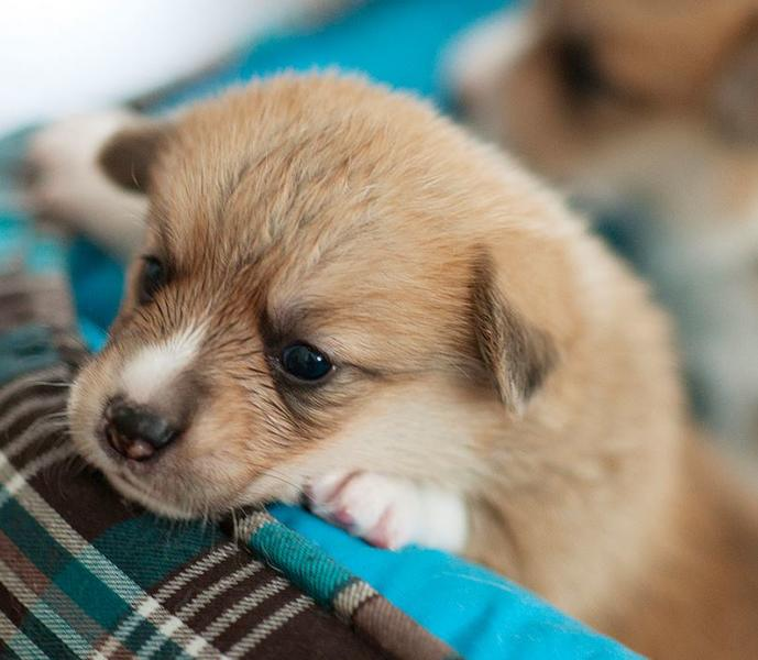 Sweet puppy pictures.JPG