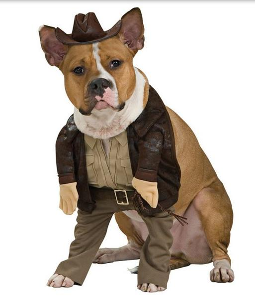 Indiana Jones Halloween Dog Costume online where to buy dog costumes.JPG