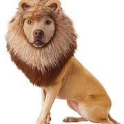 Pet shop costumes pictures of Lion Dog Costume perfect for Halloween.JPG