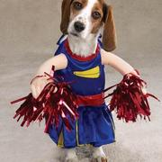 Small doggie costumes for halloween.JPG