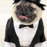 Suit for dog perfect for halloween.JPG