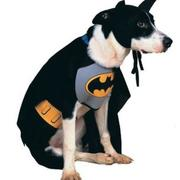 Batman dog coustome pictures.JPG