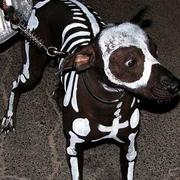 Dog Skeleton Halloween perfect for halloween party.JPG