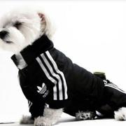 Dog sport outfit picture of Addidas dog outfit picture.JPG