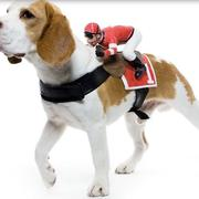 Easy dog halloween costumes picture of dog costume ideas for halloween.JPG