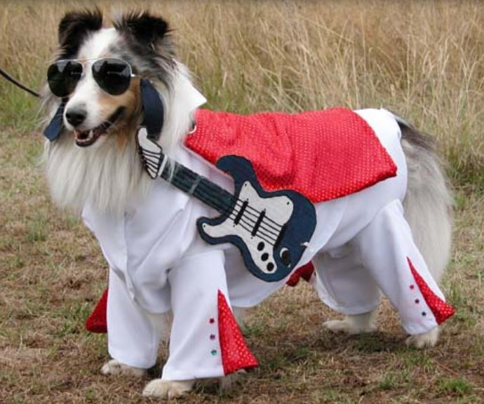 Image result for dogs in elvis costume