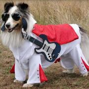 Elvis costumes for dogs picture of Elvis Pet Dog Halloween Costume.JPG