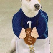 Football Dogs Halloween Costumes perfect for male dog costumes.JPG
