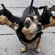 Funniest halloween pets costumes picture.JPG