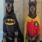 Funny halloween costumes for dogs photo.JPG