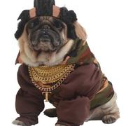 Funny halloween costumes for dogs picture of Mr. T Dog Costume.JPG