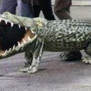 Funny unique dog halloween picture of alligator dog costume.JPG