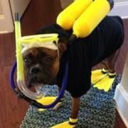 Halloween costumes pet picture of Scuba Diver Dog Costume.JPG