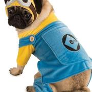 Halloween costumes small dogs picture of Minion Dog Costume.JPG