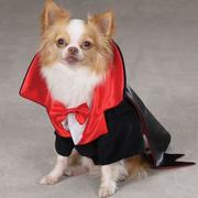 Halloween customes for dogs photos of Dracula Dog Costume.JPG