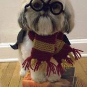 Halloween pets costumes images of Harry Potter Dog Costume.JPG