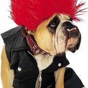 Cool funny halloween costumes for pet dog.JPG
