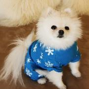 Small dogs picture of Pomeranian pup.JPG