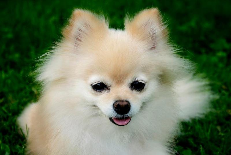 Teacup dogs picture.JPG