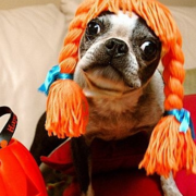 Dog funny costume pictures.PNG