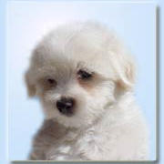 coton in white_cute.jpg