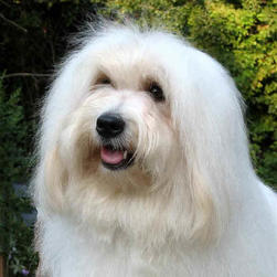 coton with very long hair.jpg