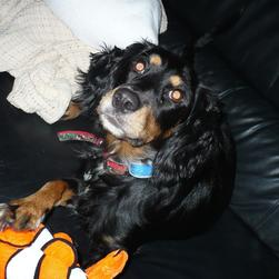Penny on coach with nemo toy