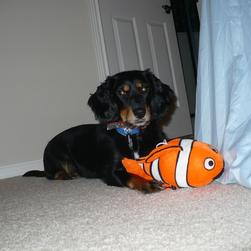 Penny playing with ther Nemo