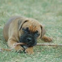 boxer bits on branch.jpg