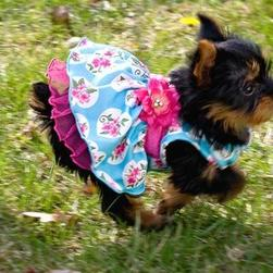 yorkshire terrier puppy with cute outfit on running.jpg