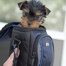 so small and cute yorkie.jpg