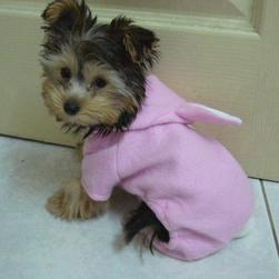 yorkie puppy in white and pink outfit.jpg