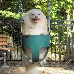 pomeranian puppy on swing_funny photo of puppy.jpg