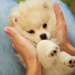 cute puppy pictures.jpg