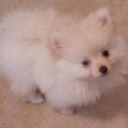 white puppy picture.jpg