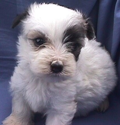 white with black dots puppy.jpg