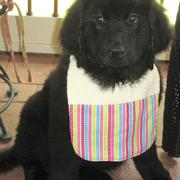 Photo of newfoundland pupppy.JPG