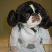 photo of small dog halloween costume.PNG