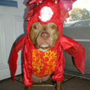 The Dragon pet costume images.PNG