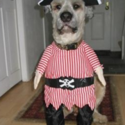 The Pirate costume for dog standing up on its two legs.PNG