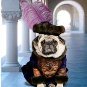 Dog king costume photos.PNG