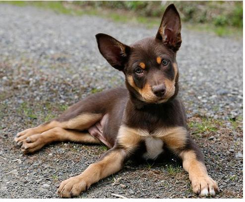 Tan Dogs Black Muzzle