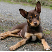 Beautiful Australian Cattle puppy in brown and tan.PNG
